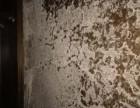 预防白蚁 花园卫生消毒 公园预防蚊子