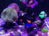 烟台开发区创意海缸工作室 海缸 海水缸 活石 小丑鱼 蛋分