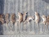 广州上门灭老鼠公司,广州家里老鼠胡乱跑,佳洁虫控解烦恼