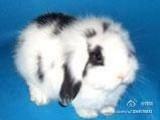 养兔场常年供宠物免和其他肉免等