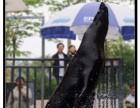 海狮表演 海洋生物展览 海狮表演出租 水上动物表演演绎