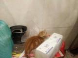 我家可爱的小猫咪