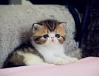 广州 波斯猫哪里有得卖 多少钱