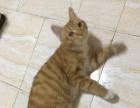 猫咪送养,找同是爱猫的人收养