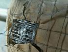 出售二手彩钢板12/米珍珠岩一批4/大袋镀锌电焊网