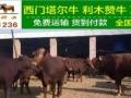 山西省肥牛崽价格山西省肥牛崽多少钱一头