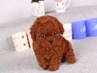 上海宠物领养中心 大量狗狗免费送人