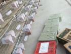 优惠出售一批公棚成绩鸽迟归鸽还有名家大户的鸽子鸽子保真保健康