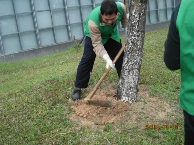石龙杀虫公司 石碣杀虫所 东城杀虫中心 高效环保
