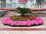 北京十一国庆花坛摆放 造型花坛 可开发票 五色草