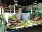 专业水草造景鱼缸搬家与维修清洗鱼缸等水族一站式服务