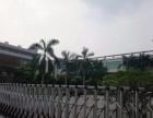 东城新出独院钢结构厂房4600平米火热招租