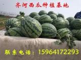 山东省西瓜批发多少钱一斤 甜王 丰乐一号西瓜大量批发