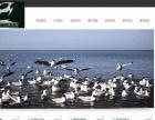 企业、个人网站建设