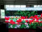 、台州全球LED显示屏较大工程批发服务商