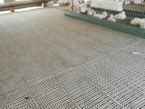 鸭粪板 鸭舍用塑料粪板 塑料漏粪地板