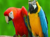 杭州滨江本地出售观赏鸟种类繁多