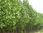 出售绿色植物