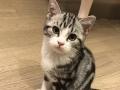 我想养只小猫咪。