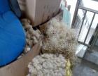 长春厂家专业回收PPSU奶瓶废料回收聚四氟乙烯刨丝