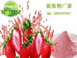 纯天然100% 草莓粉 草莓果粉 速溶草莓果粉 浓缩粉
