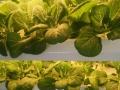 植物工厂加盟 种植养殖 投资金额 1-5万元