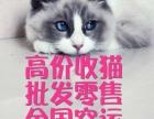 天价收猫,,各品种宠物猫