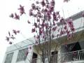 港南工业区 厂房 1500平米 带办公楼