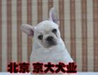 纯种拉布拉多 奶白色法牛多少钱 北京斗牛犬舍