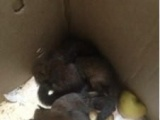 黄山松鼠,魔王松鼠,金花90