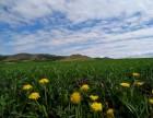 呼伦贝尔旅游包车体验真正的草原之旅