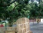 深圳南山区西丽开放式宠物寄养可预订