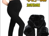 冬季孕妇保暖裤 可调节加厚加大码珍珠绒一体裤 不起球打底裤批发