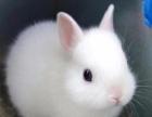 海南海口实体店仓鼠兔子荷兰猪龙猫刺猬专卖店