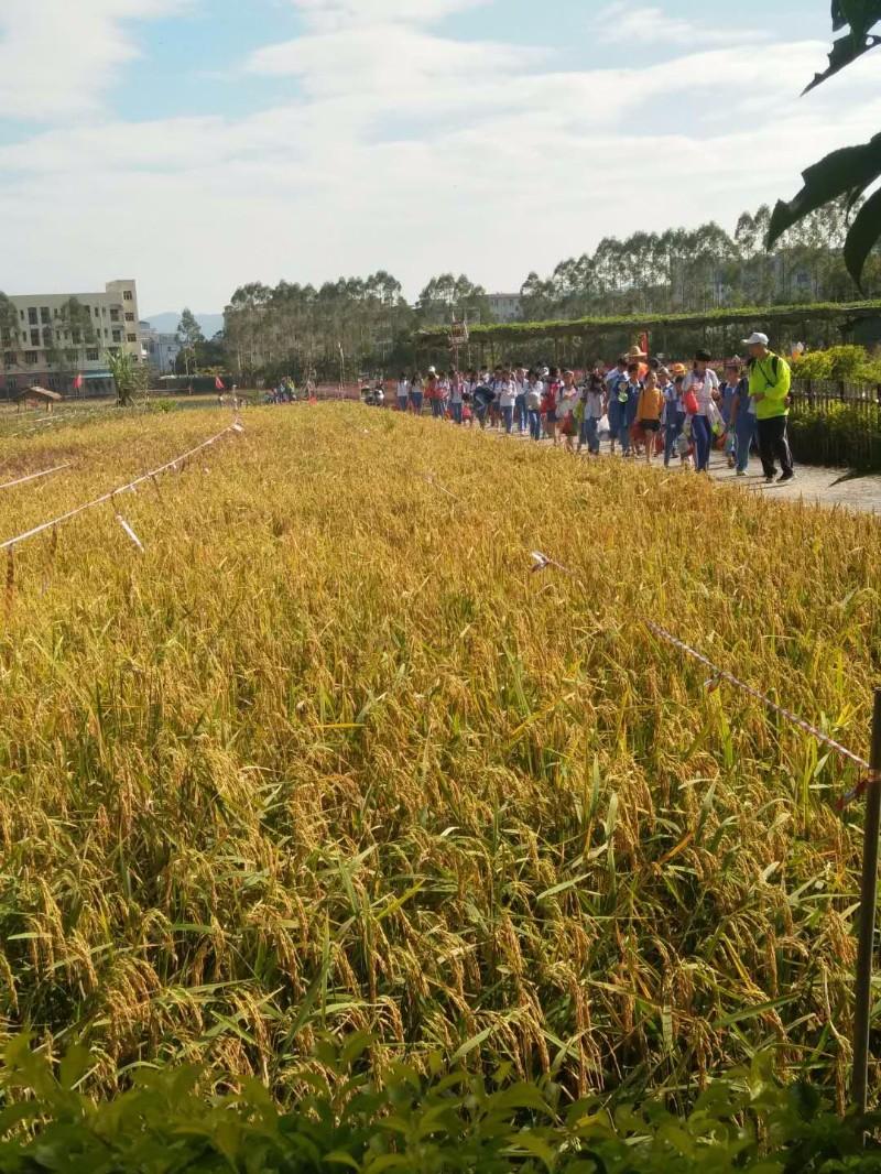 深圳亲子秋游户外求知农耕体验让孩子玩中取乐玩中成长