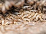 温州市鹿城区人民路白蚁防治措施