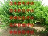 贵州苗木损失评估,贵州果树价值评估,贵州林木损失价值评估
