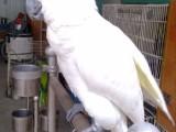 本地出售观赏鸟健康保障