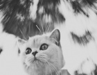 宠物摄影,宠物写真,临沂宠物摄影