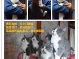 贵阳喵喵咪呀猫舍,贵阳买宠物猫就找我,实力包猫瘟可签购猫协议