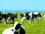 太原市晋源区牛奶奶生鲜乳业