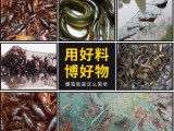 安徽皖一鱼饵笼中王虾鳝饵料300g升级版鱼饵渔饵钓饵