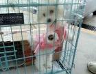 南京禄口国际机场宠物、标书、鲜活、螃蟹加急托运