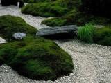 长沙观赏鱼缸定做 生态鱼缸 雨林庭院绿化就找 南国水景