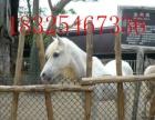山东珍禽宠物养殖场常年出售 租赁 蓝孔雀 白孔雀