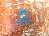 广西俄罗斯金草鱼苗批发,钦州青竹鲩鱼苗,浦北七星鱼苗