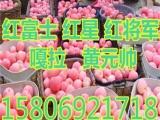 山东红富士苹果价格         25J