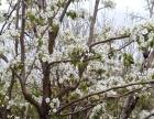水西沟苹果园山庄邀您看美景、吃美食