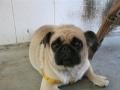 宠物店仲恺惠环店出售各种世界名犬宠物诊疗免疫注射狗