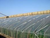 哪里能买到热销寿光大棚膜大棚PO农膜供应